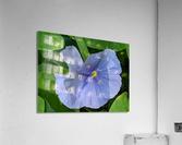 Refreshing Nature  Acrylic Print
