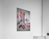 Singe  Acrylic Print