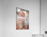 Flamant   Acrylic Print