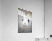 Lapin  Acrylic Print