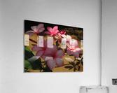 Pink Plumeria 2  Acrylic Print