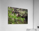 Tropical Bird in Tree  Acrylic Print