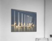 Pelicans of the Salton Sea  Acrylic Print
