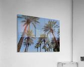 Date Garden Oasis  Acrylic Print