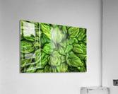 Hosta Glow  Acrylic Print