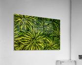 Green Chaos  Acrylic Print