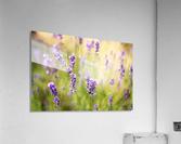 Lavender flowers  Acrylic Print