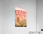Beautiful Sunset lavender flowers on a field  Acrylic Print