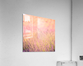 Sunset lavender flowers, instagram effect  Acrylic Print
