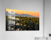 Standing Room Only  Acrylic Print
