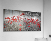 Idyllic Field of Poppies with Sun  Acrylic Print