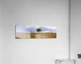 Tuscany Tree  Acrylic Print