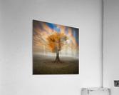 lonesome  Acrylic Print