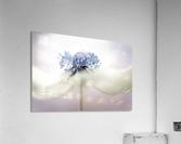 Anemone  Acrylic Print