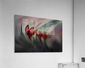 Krokus  Acrylic Print