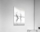 Trees with Birds (2)  Acrylic Print