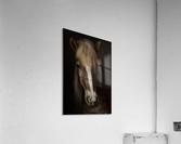 Sapience  Acrylic Print