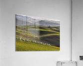 pastoral  Acrylic Print