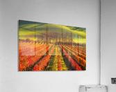 vine-growing  Acrylic Print