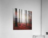 Autumnal Tracks  Acrylic Print