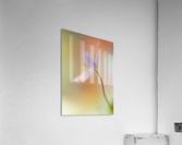Tender spring  Acrylic Print