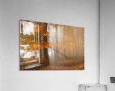 Edge of the woods  Acrylic Print