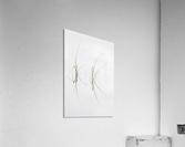 Zensation  Acrylic Print