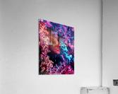 Coral Hind  Acrylic Print