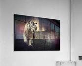 White walker  Acrylic Print