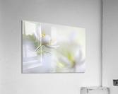 White Spring  Acrylic Print