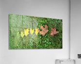 Lifespan  Acrylic Print