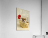 Puppy In A Basket  Acrylic Print