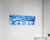 Tern  Impression acrylique