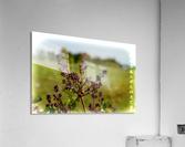 Flowers  Impression acrylique