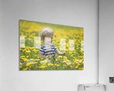18-Month-Old Boy In Dandelion Field; Thunder Bay, Ontario, Canada  Acrylic Print