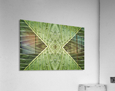 Close up of vein patterns in leaves;Gold coast queensland australia  Acrylic Print
