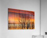 Silhouetted tree branches with dramatically colourful clouds at sunrise; Calgary, Alberta, Canada  Acrylic Print