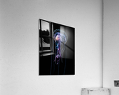 Jellyfish (Pelagia noctiluca) with fish prey photographed during a blackwater scuba dive several miles offshore of a Hawaiian Island at night; Hawaii, United States of America  Acrylic Print