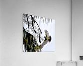 Orioles Abstract 1   Acrylic Print