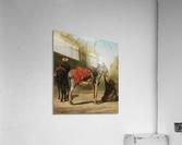 Donkeys in Cairo  Acrylic Print