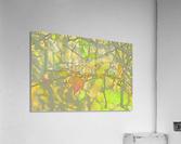 Leaves Macro 5 Abstract 1  Acrylic Print
