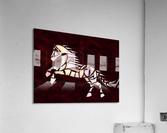Cavallerone - white horse  Acrylic Print