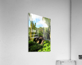 Nevis cactus  Acrylic Print