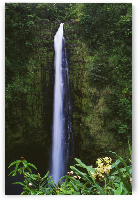 Hawaii, Big Island, Akaka Falls, Tropical Flowers Blooming In Foreground. by PacificStock