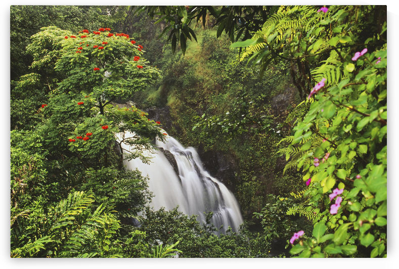 Hawaii, Maui, Hana, Waterfall Surrounded By Tropical Flowers And Plants by PacificStock