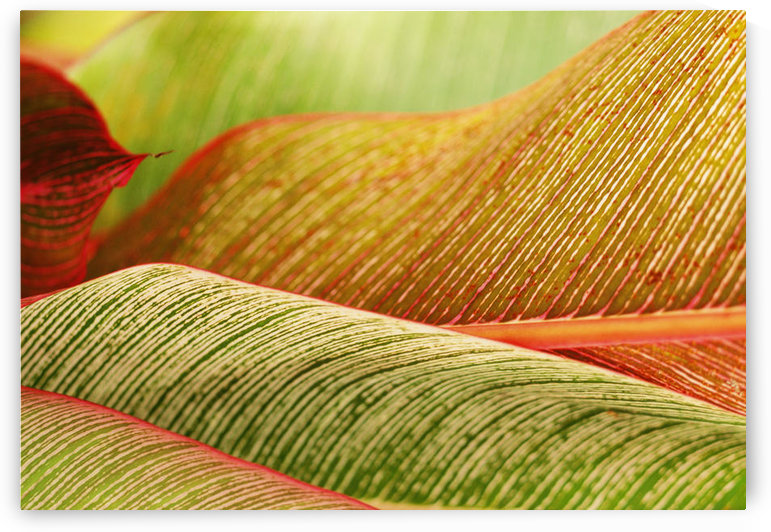 Indonesia, Bali, Close-Up Of Tropical Plants, Leaves by PacificStock