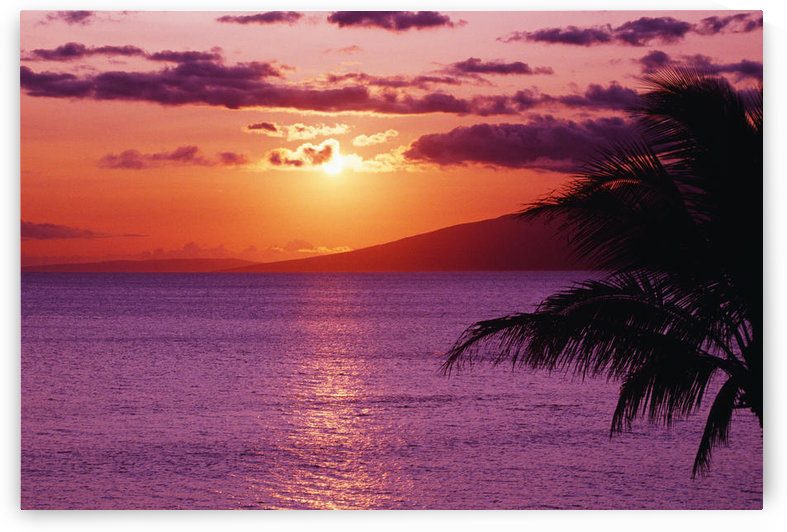 Hawaii, Maui, Beautiful Tropical Sunset With Palm Tree. by PacificStock