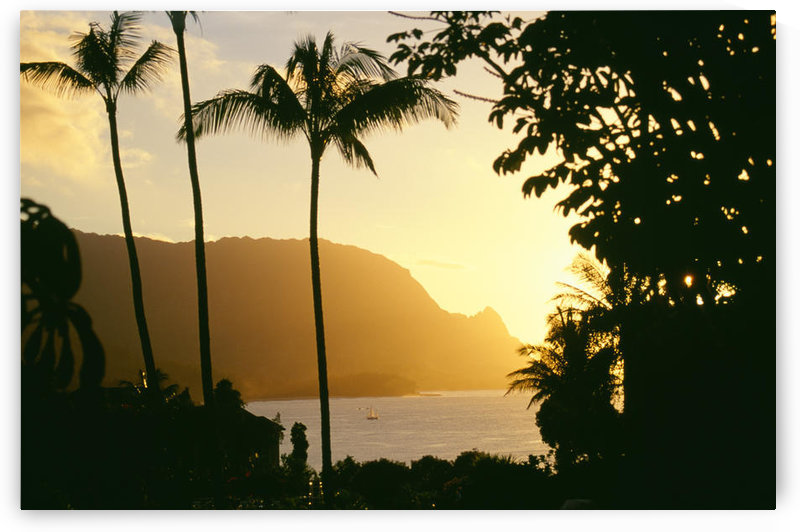 Hawaii, Kauai, Hanalei Bay, Bali Hai, Yellow Sunset Through Palm Trees And Vegetation by PacificStock