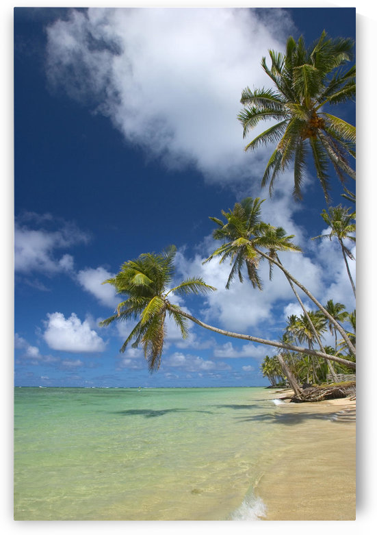 Hawaii, Palm Trees Lean Over Beach, Calm Turquoise Ocean, Dramatic Sky. by PacificStock