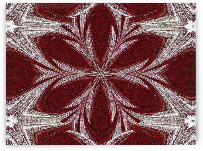 Red Daisy  by Sherrie Larch